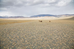 Landbouwbedrijfdieren in Mongools landschap Stock Afbeelding