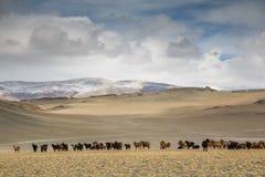 Landbouwbedrijfdieren in Mongools landschap Stock Foto's