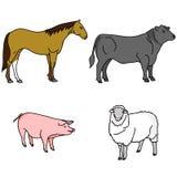 Landbouwbedrijfdieren: Paard, stier, varken en schapen Stock Foto's
