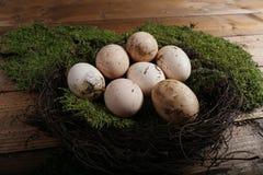 Landbouwbedrijfeieren in een klein nest Royalty-vrije Stock Foto