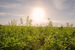 Landbouwbedrijfgebied stock fotografie
