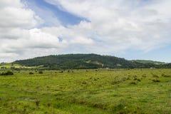 Landbouwbedrijfgebied en heuvel stock foto's
