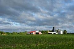 Landbouwbedrijfgebouwen en Gewas Stock Fotografie