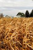 Landbouwbedrijfhuis en graangebied op dalingsdag Royalty-vrije Stock Afbeeldingen