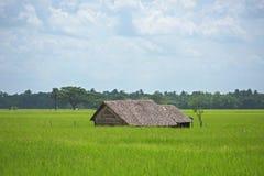 Landbouwbedrijfhuis onder padievelden in Myanmar Stock Fotografie