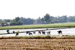 Landbouwbedrijfinstallatie Stock Foto