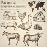 Landbouwbedrijfinzameling Vector illustratie Royalty-vrije Stock Fotografie
