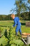 Landbouwbedrijfjongen die moestuin wieden stock afbeelding