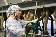 Landbouwbedrijfkoeienmelkster in koeienschuur met automatische koe melkende machines stock foto's
