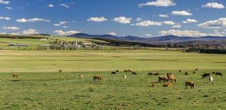 Landbouwbedrijflandschap Stock Afbeelding