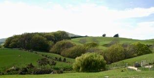 Landbouwbedrijflandschap op een de Zomerdag in Otago stock afbeelding
