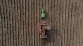 Landbouwbedrijfmachines het oogsten aardappels Landbouwersgebied met een aardappelgewas Het schieten van de lucht stock footage