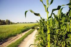 Landbouwbedrijfspoor Stock Foto