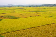 Landbouwbedrijven Royalty-vrije Stock Foto's
