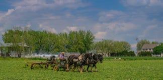 Landbouwbedrijven Amish in Pennsylvania royalty-vrije stock foto