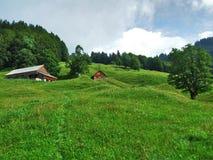 Landbouwbedrijven en weilanden van het Ostschweiz-gebied stock foto