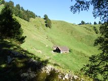 Landbouwbedrijven en weilanden van het Ostschweiz-gebied stock foto's