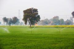 Landbouwbedrijven met Douche stock afbeelding