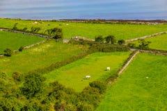 Landbouwbedrijven met koeien en paarden in Burren-maniersleep met de baai van Galway royalty-vrije stock foto's