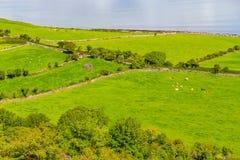 Landbouwbedrijven met koeien en paarden in Burren-maniersleep met de baai van Galway stock afbeelding