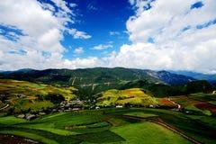 Landbouwbedrijven op het Plateau van Qinghai Tibet royalty-vrije stock afbeelding