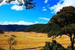 Landbouwbedrijven op het Plateau van Qinghai Tibet in Wintertijd royalty-vrije stock foto's
