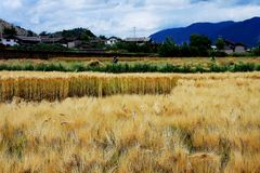 Landbouwbedrijven op het Plateau van Qinghai Tibet in Wintertijd stock afbeelding
