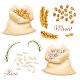Landbouwdiegraangewassen - tarwe en rijst op witte achtergrond wordt geïsoleerd Vector realistische korrels, oren clipart inzamel royalty-vrije illustratie