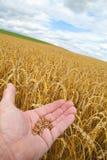 Landbouwer Royalty-vrije Stock Foto