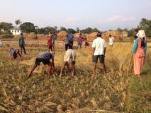 Landbouwer Stock Foto