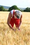 Landbouwer Royalty-vrije Stock Afbeeldingen