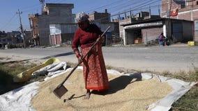 Landbouwer bezig op het werk stock footage