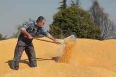 Landbouwer bij graanstapel na oogst royalty-vrije stock afbeeldingen