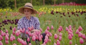 Landbouwer Checking Pink Tulips bij Landbouwbedrijf stock videobeelden