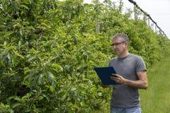 Landbouwer With Clipboard die in Boomgaard Voorwaarde van Apple-Bomen controleren royalty-vrije stock fotografie