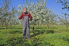 Landbouwer in de boomgaard Stock Afbeeldingen