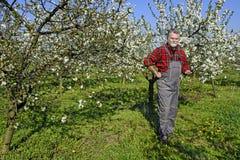Landbouwer in de boomgaard Stock Fotografie