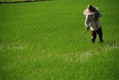 Landbouwer die aan gebied werkt Stock Afbeeldingen