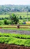 Landbouwer die aan greens groentenlandbouwbedrijf werken royalty-vrije stock afbeeldingen