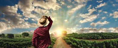 Landbouwer die aan koffiegebied bij zonsondergang werken openlucht stock afbeelding