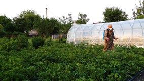 Landbouwer die beschermende kleren en van maskernevels chemische producten op aardappelspruiten dragen stock footage