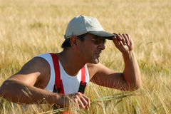 Landbouwer die de gerst inspecteert royalty-vrije stock afbeeldingen