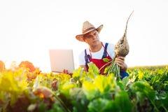 Landbouwer die de kwaliteit van de suikerbieten controleren stock foto