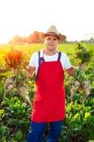 Landbouwer die de kwaliteit van de suikerbieten controleren Stock Foto's