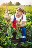 Landbouwer die de kwaliteit van de suikerbieten controleren Royalty-vrije Stock Foto's