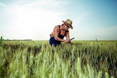 Landbouwer die de kwaliteit van tarwe met vergrootglas controleren stock afbeelding