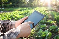 Landbouwer die digitale tabletcomputer in gecultiveerde landbouw F met behulp van royalty-vrije stock foto's