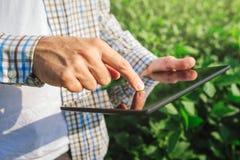 Landbouwer die digitale tabletcomputer in gecultiveerde sojaboongewassen met behulp van stock fotografie