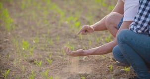 Landbouwer die droge grond onderzoeken stock footage