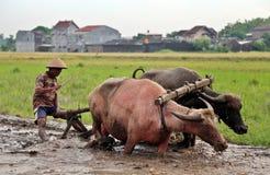 Landbouwer die een gebied ploegen die traditionele hulpmiddelen met behulp van Stock Foto's